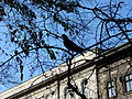 Facade with Silhouetted Bird - Pest Side - Budapest - Hungary.jpg