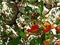 Fale - Giardini Botanici Hanbury in Ventimiglia - 680.jpg