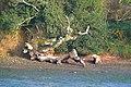 Fallen tree (2183629698).jpg