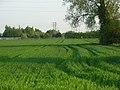 Farmland, Sutton Courtenay - geograph.org.uk - 800808.jpg