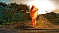 Female-shaped carrot.jpg