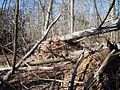 Fentress EF1 TN tornado damage 2009.jpg