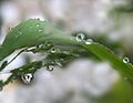 Few flowers are refracted in rain droplets.jpg