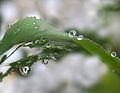 Few flowers are refracted in rain droplets.jpg
