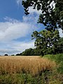 Field and oak trees near Gappah - geograph.org.uk - 908035.jpg