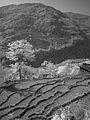 Fields near Kimche (4525940818).jpg