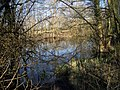 Fish Pond at Ascott Park - geograph.org.uk - 1734106.jpg