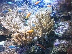 Tropicarium Kolm?rden - Wikipedia