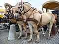 Fjordpferde vor Kutsche.JPG