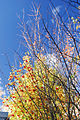Flickr - JennyHuang - Tree and sky in New Zealand (4).jpg