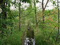 Flooded path in the Teufelsbruch swamp 12.jpg