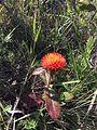 Flor do Cerrado JBB.jpg