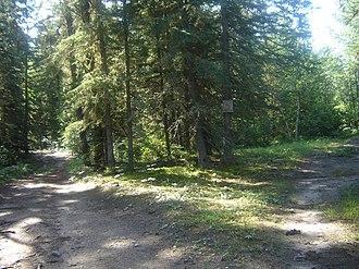 Meadow Lake Provincial Park - Flotten Lake boreal forest