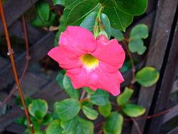 Flower-center142058.jpg