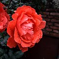 Flower4321.jpg