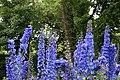 Flowers in National Botanic Garden,Dublin,Ireland - panoramio (1).jpg