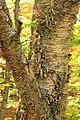 Foliage Walk (15) (29719042493).jpg