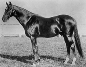 1880 Kentucky Derby - 1880 winner Fonso.