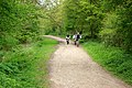 Footpath, Thorndon Country Park - geograph.org.uk - 782771.jpg
