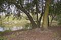 Footpath round the pond, Lakeside, Enfield - geograph.org.uk - 770176.jpg