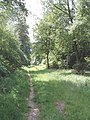 Footpath through Hillock Wood - geograph.org.uk - 184512.jpg
