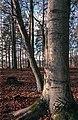 Forest (31504300617).jpg