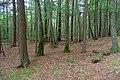 Forest - Northfield Mount Hermon School - DSC06585.jpg
