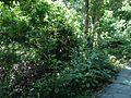 Forest in Sefa-Utaki.JPG