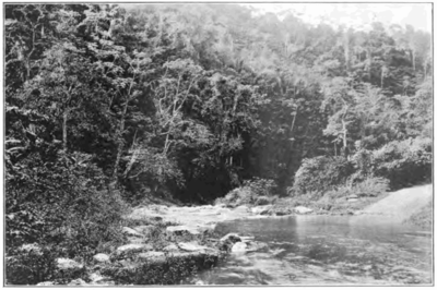 Fotg cocoa d174 a scene in the maracas valley trinidad.png