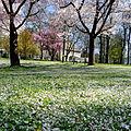 Frühling im Bad Mergentheimer Kurpark. 17.jpg