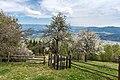 Frauenstein Lorenziberg 1 Obstgarten 21042020 8802.jpg