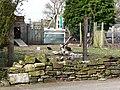 Free range hens, Woodhouse Lane - geograph.org.uk - 1760496.jpg