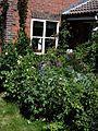 Front garden - Flickr - peganum (22).jpg