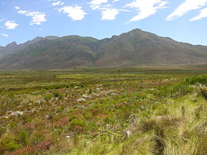 Sclerophyll - Fynbos in South Africa