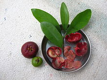 Garcinia indica - fruits, seeds, pulp and rinds.jpg