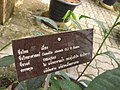 Gardenology.org-IMG 7643 qsbg11mar.jpg