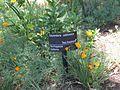 Gardenology.org-IMG 9655 rbgm10dec.jpg