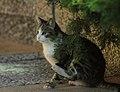 Gato callejero en Madrid 17.jpg