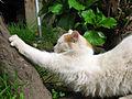 Gato relajado (9131306938).jpg