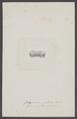Gelasimus perlatus - - Print - Iconographia Zoologica - Special Collections University of Amsterdam - UBAINV0274 006 01 0005.tif