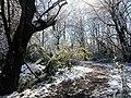 Georgia snow IMG 4753 (38061029145).jpg