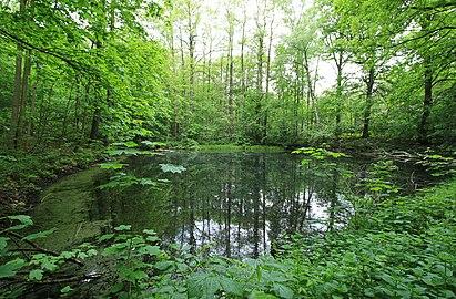Geschützter Landschaftsbestandteil Schubertgrund in Sachsen. 2H1A1079WI.jpg