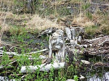 Geschnitzte Wurzel Teufelsmoor.jpg