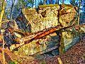 Gesprengter Bunker im Beckinger Wald 13.jpg