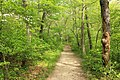 Gfp-indiana-dunes-national-lakeshore-forest-trail-path.jpg