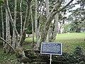 Ghana Aburi Botanical gardens (10).jpg