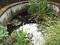 Giardino botanico di Brera (Milan 35.jpg