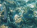 Glover's Reef 2-14 (33116428185).jpg
