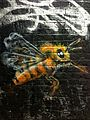 Graffiti in Shoreditch, London - Save the Bees by Masai (9442052390).jpg