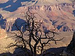 File:Grand Canyon, October 2008 (2985703838).jpg